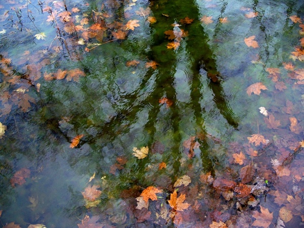 water leaves reflections