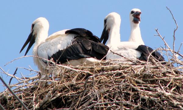well stocked nest