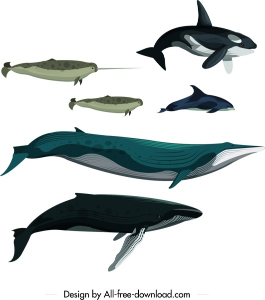Whale Fish School Drawing Colored Cartoon Sketch Free Vector In