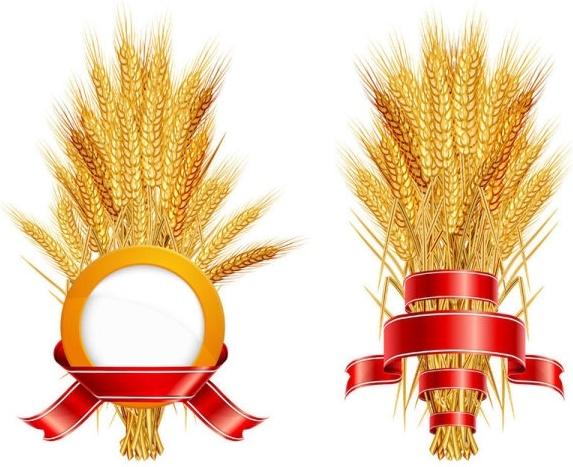 wheat 05 vector