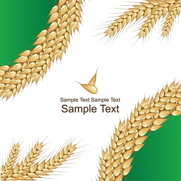 wheat grain greeting card vector