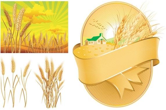 wheat theme vector