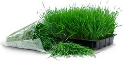 Wheatgrass tray bag