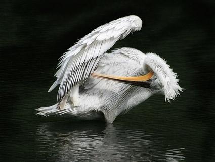 white bird picture