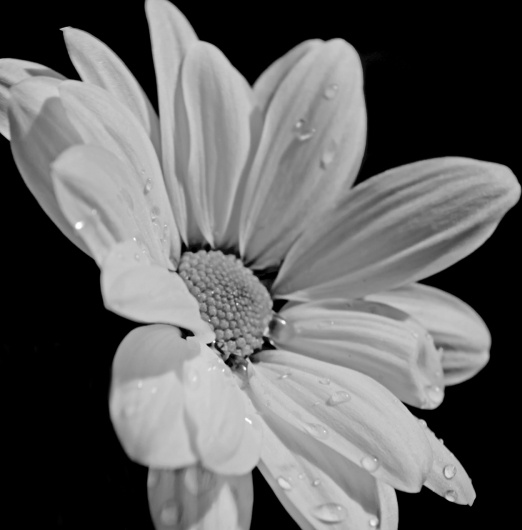 White Flower On Black Background Free Stock Photos In Jpeg Jpg 1920x1272 Format For Free Download 122 05kb