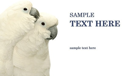 white parrot picture 1