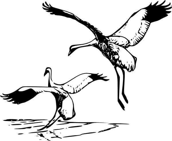 Whooping Crane clip art