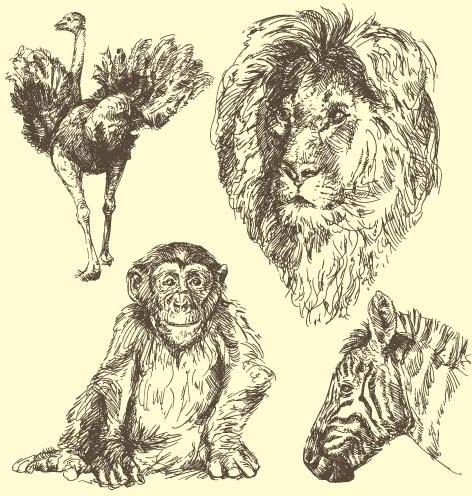 wild animals hand drawing vectors set