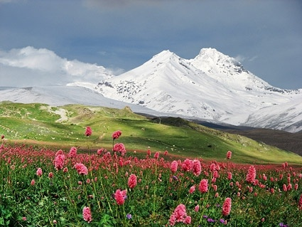 wild flowers under the snowcapped mountains picture