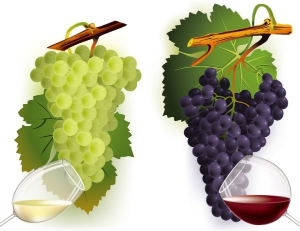 wine and grapes vector 2
