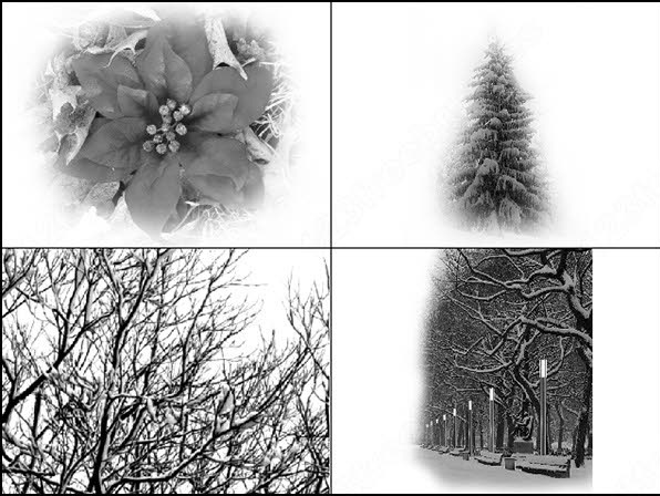 winter brush