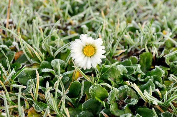 winter hoarfrost on a flower