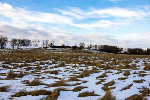 Flower Mound Christmas Tree Farm