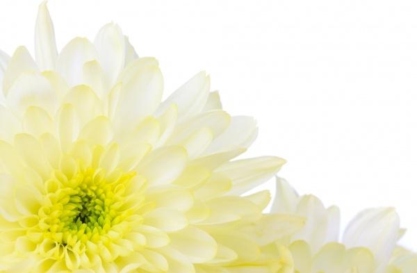 yellow flower border