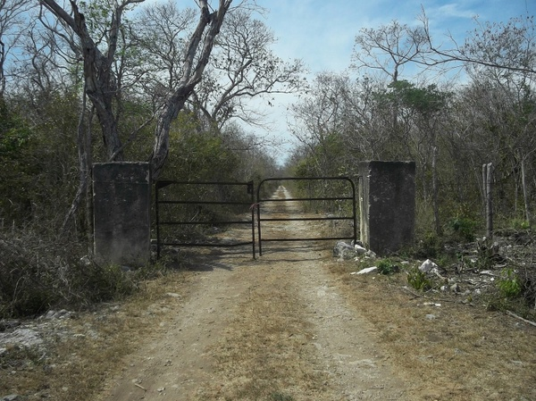 yucatan mexico landscape