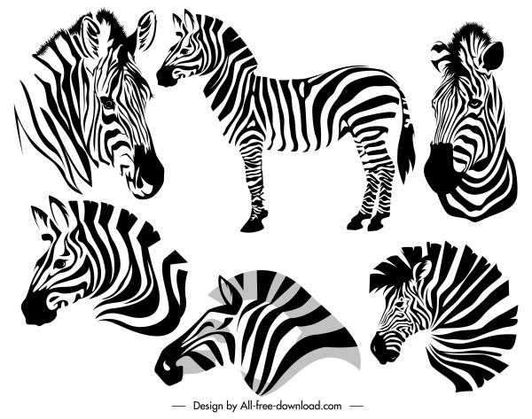 zebra icons black white sketch