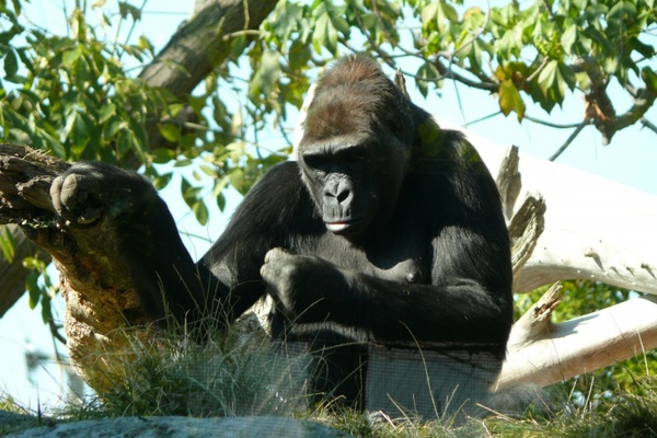 zoo san diego animals