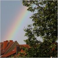 rainbow city tree