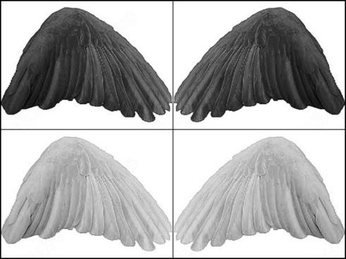 027_birds