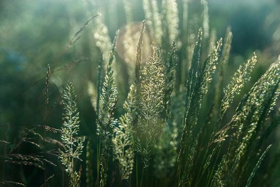 10019 spring grasses