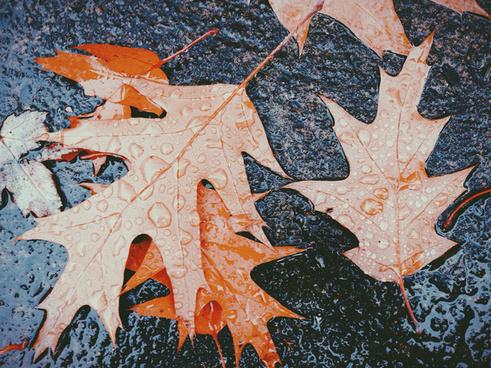 10036 november pdx leaves