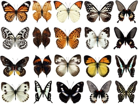 100 species of butterflies psd layered highdefinition 2