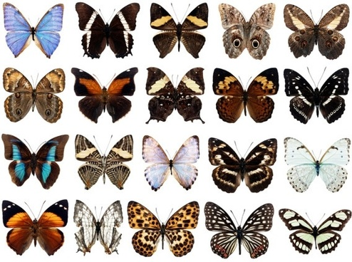 100 species of butterflies psd layered highdefinition 3
