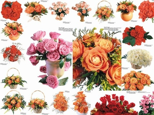 109 colored roses picture 3