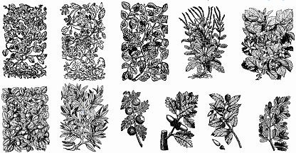 floral engravings sets classical black white sketch