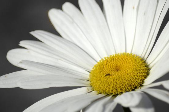 2012 last daisy