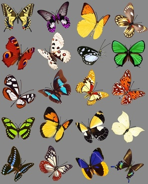 20 butterfly psd images