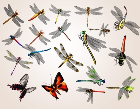 20 dragonfly and butterfly psd
