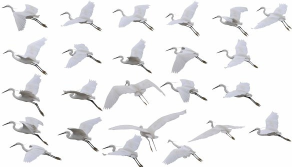25 kinds of flying crane psd layered