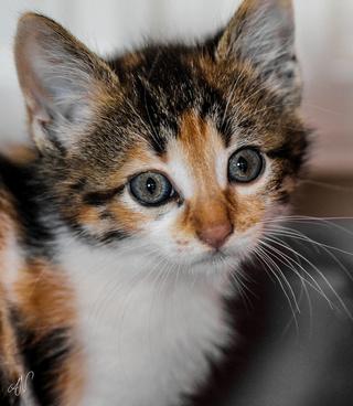 26365 kitty