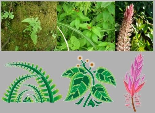 2 chinese medicinal plants