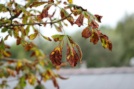 3365 leaves