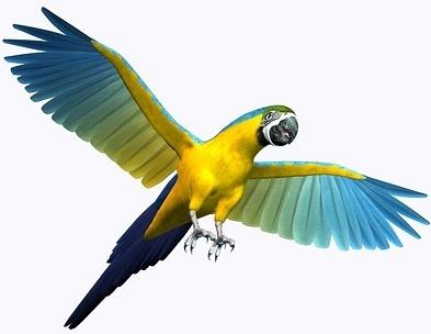 3d parrot picture