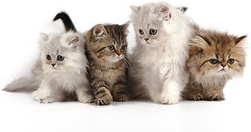 4 cute kittens picture