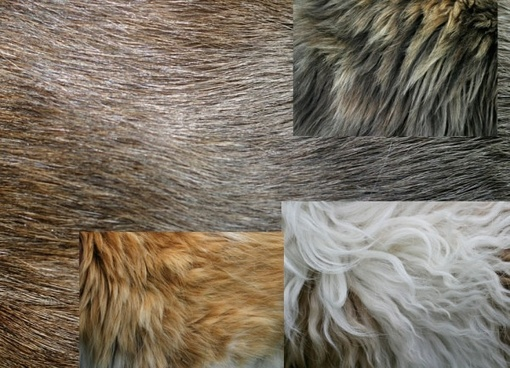 5 hd fur highdefinition picture