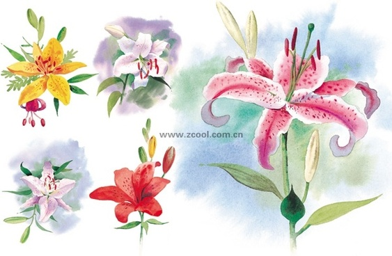 5 watercolor lilies highdefinition picture