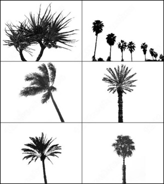 6 palm tree brush