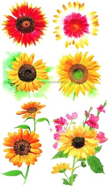 6 watercolor style sunflower hd picture