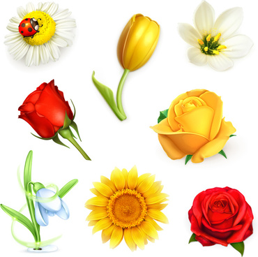 8 beautiful flowers vector
