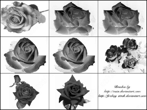 9 rose flower photoshop brush