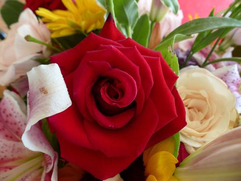 a big red rose