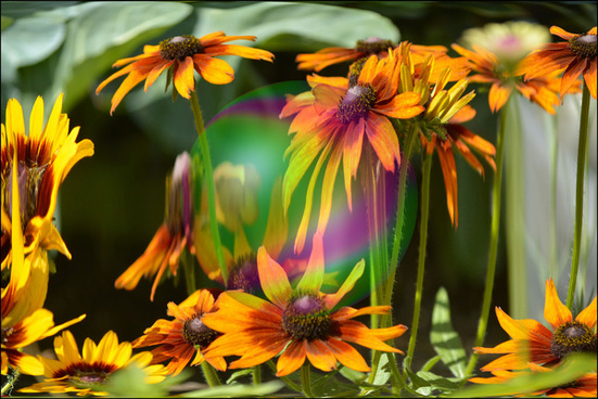 a bubble among flowers