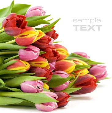 a bunch of tulips highdefinition picture