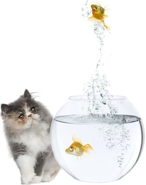 a cat and a goldfish 06 hd pictures