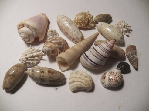 a collection of sea shells