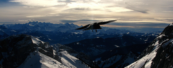 a crow flying above mount pilatus luzern switzerland